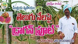 Download Organic Dragon Fruit Cultivation || G. Venkateshwarlu || Contact - 8500989301 Video