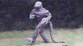 Download 9 Recent Sightings of Cryptids Video