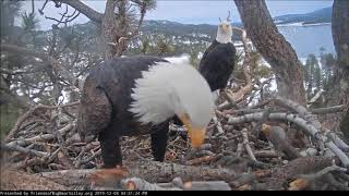 Download Love Is In The Air! Late Afternoon Special Deliveries! Big Bear Eagles 12-3-19 Video