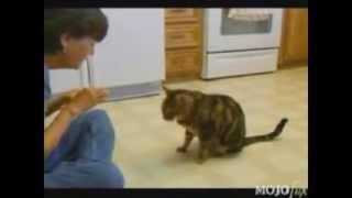 Download Подборка умных котов Video