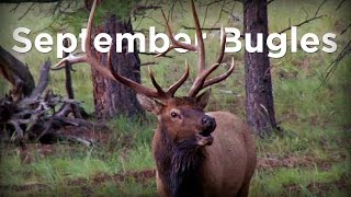 Download ″September Bugles″ - Arizona Archery Elk Hunt Video