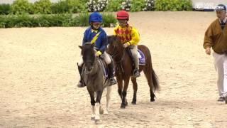 Download Shetland Pony Race! Video