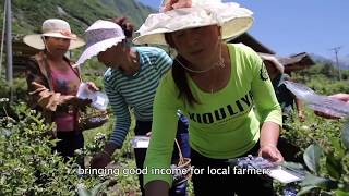 Download Huanglong Biosphere Reserve implements Sustainable Development Goals (China) Video