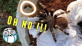 Download Tarantula Unboxing ~ SHE BROKE HER LEG ?!! :( Video