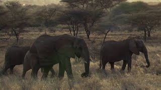 Download SHOCKING: Poachers Attack Wild Elephant in Kenya - This Wild Life - BBC Video