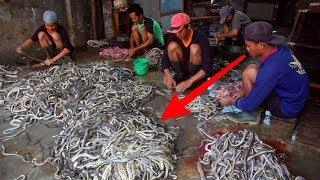Download Selamat Datang Di Kampung Ular Kertasura,, Tetnyata Semua Jenis Disini Ada......WOOW Video