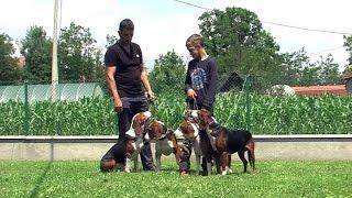 Download ŽIVOT UZ I ZA GONIČE! MILAN I RADE BULIJA IZ SLATINE. Video