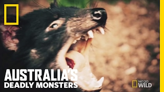 Download Australia's Top 3 Stone Cold Killers | Australia's Deadly Monsters Video