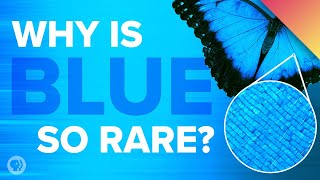 Download Why Is Blue So Rare In Nature? Video