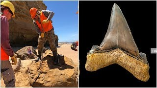 Download An Australian Scientist Found A Tooth So Big That It's Hard To Believe This Monster Actually Existed Video