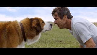 Download 'A Dog's Purpose' Promises to Be a Love Letter to Man's Best Friend - Watch the Trailer Video