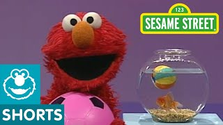 Download Sesame Street: Elmo's World: Play Ball! Video