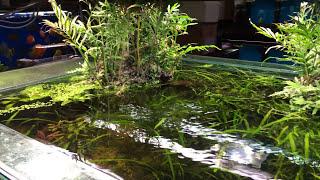 Download Nature Aquarium Store! Video