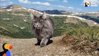 Download Adventure Cat Loves Swimming, Climbing Mountains With Parents | The Dodo Video