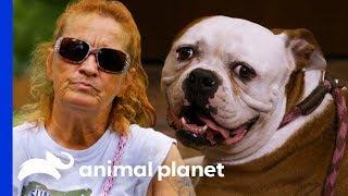 Download Bulldog Reunited With Family After Being Abandoned At Villalobos | Pit Bulls & Parolees Video