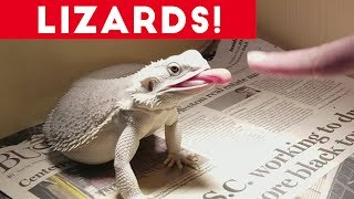 Download Funniest Lizard & Reptile Blooper & Reaction Videos of 2017 Compilation | Funny Pet Videos Video
