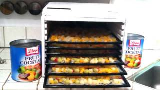 Download Dehydrating Canned Fruit Cocktail in an Excalibur 3900 series fodd dehydrator Video