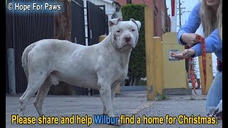 Download Homeless and abused, this Pit Bull didn't lose HOPE that something amazing will happen! Video