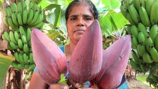 Download FARM FRESH BANANA FLOWER (fry and vada ) Cooking Two Varieties | VILLAGE FOOD Video