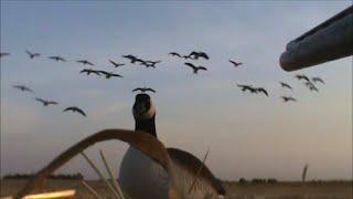 Download Waterfowl Hunting Recap 2013 Video