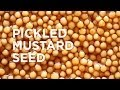 Download Pickled Mustard Seed Video