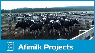 Download afimilk® - The world's largest dairy farm project in Vietnam Video