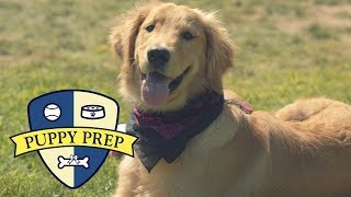 Download Meet The Puppies Training To Be Service Dogs Video