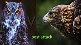 Download Eagle vs owl best attack hd|video you never seen before Video