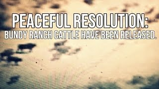 Download Bundy Ranch Cattle Have Been Released!!! Video