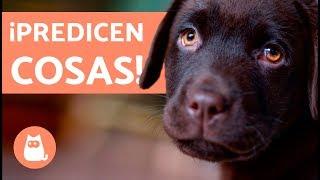 Download 10 cosas que LOS PERROS PREDICEN Video