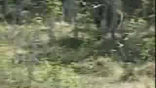 Download Arg björn, orädd farbror. Video