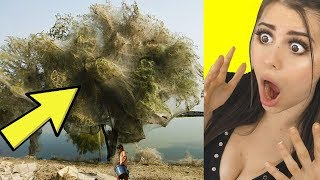 Download CRAZIEST Things Only Found in Nature ! Video