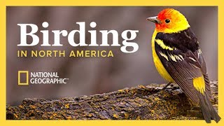 Download The National Geographic Guide to Birding in North America | The Great Courses Video
