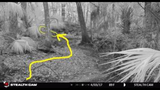 Download What the TRAILCAM CAPTURED. CAUTION! The Rabbit Hole is DEEP! Video