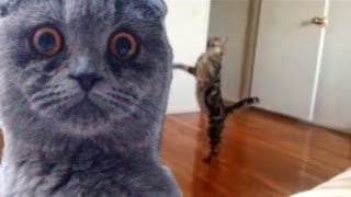 Download Epic Funny Cats - Compilation Part Two ″The Cat Strikes Back!″ Video