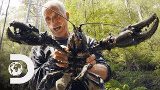 Download Jeremy Wade Finds Giant Crayfish | Jeremy Wade's Dark Waters Video