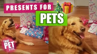 Download Dogs Opening Christmas Presents | Funny Dog Compilation Video