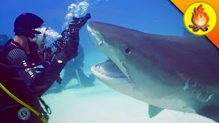 Download Nearly CHOMPED by a SHARK! Video