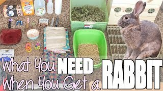 Download What You Need When You Get A Rabbit Video