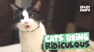 Download Cats Being Hilarious Compilation - Cats are Jerks 😂😂😂 Video