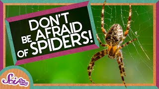 Download Don't Be Afraid of Spiders! Video