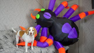 Download Dog vs. Giant Spider: Cute Dog Maymo Video