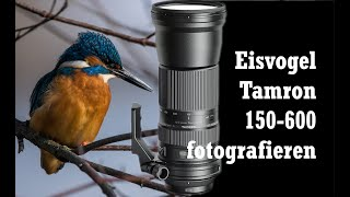 Download Eisvögel fotografieren - Skymountain.de ...unterwegs! Video