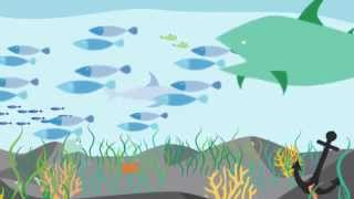 Download What is the MSC and why is certified sustainable seafood important? Video