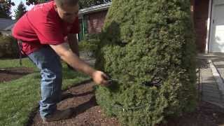 Download HouseSmarts ″Outdoor Holiday Decorating″ Episode 128 Video