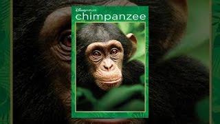 Download Chimpanzee Video