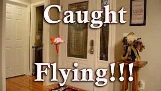 Download Elf on the Shelf Caught Opening Door and Flying (Part 5 of 5) Video