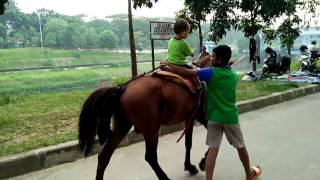 Download Kuda lucu / Raffasya naik kuda / kuda poni / mainan anak / pacuan kuda / anak kecil naik kuda Video