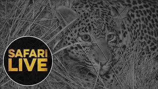 Download safariLIVE: The Gauntlet - Episode 1 - July 28, 2018 Video