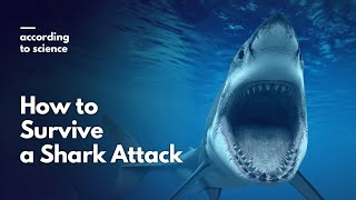 Download How to Survive a Shark Attack, According to Science Video